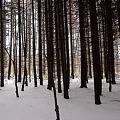 森のさんぽ  DSC02450