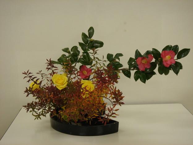 ユキヤナギ、椿、黄バラ