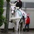 写真: 川崎競馬の誘導馬05月開催 誕生日記念レースVer-03-large