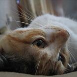 猫昼ひこね