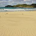 砂の鳴く浜