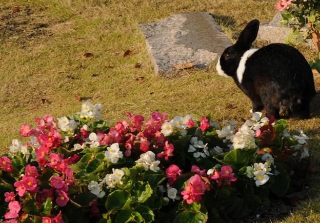 野良ウサギ