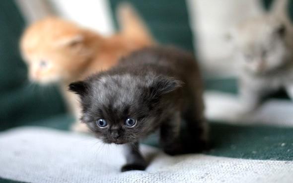 kitten1044_08