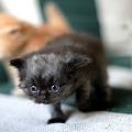 Photos: kitten1044_08