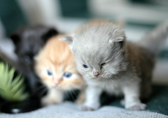 kitten1044_09