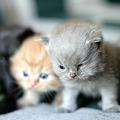 Photos: kitten1044_09