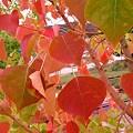 Photos: 秋の色 3