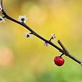 ウメモドキ~花と実