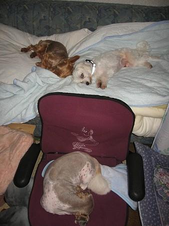 ごぅちゃん、福ちゃんもそれぞれの寝姿で。