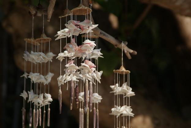 カイジ浜の風に揺らぐ 竹冨島のクリスマス