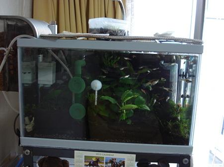 20100503 41cm水槽のリセット