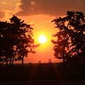 Photos: 高砂の松、夕日を浴びて!