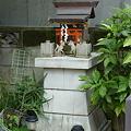 Photos: 稲荷社(屋敷神 台東区池之端) 1