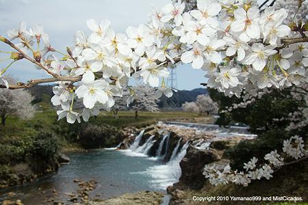 春の十二ヶ滝