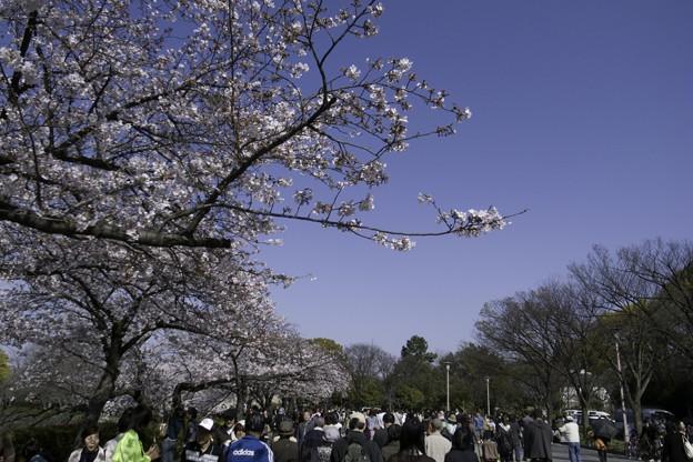 Photos: 大阪城公園、春の日03