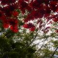 Photos: 春と秋の混在