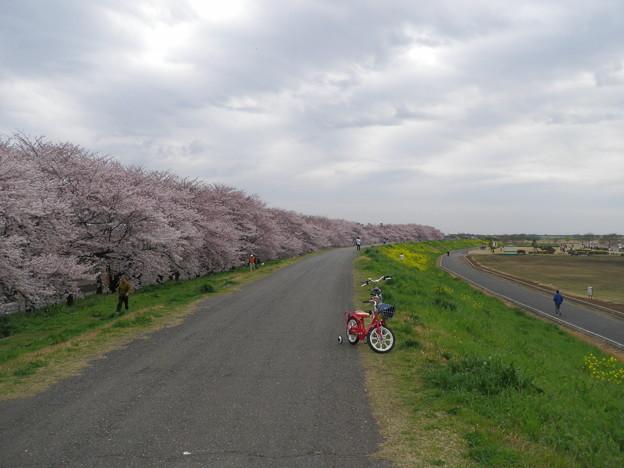 2010_04_07_熊谷桜堤-3