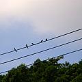 写真: 電線にて