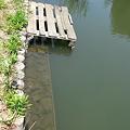 Photos: O池