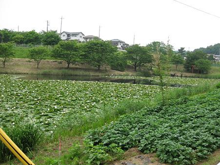 高寅寺中池