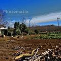 Photos: 畑HDR 009_10_11_12_13_15
