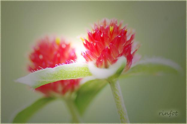 strawberryfield・・・。