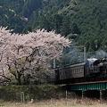 C11 227と桜