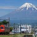 富士山と赤ガエル
