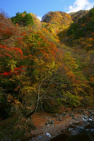 中津川と紅葉