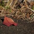 秋も終盤です
