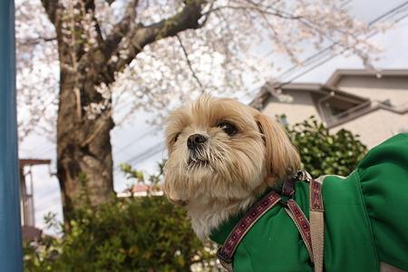 桜とくるみ3