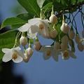 樹木四季巡り<その花と実>