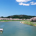 桜咲く白石川