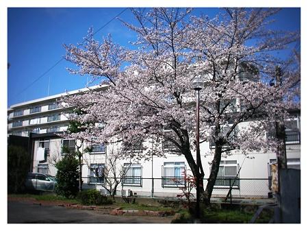 桜2010_04