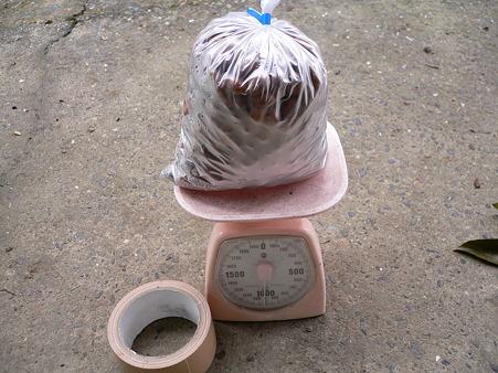 冷凍びわの種1kg