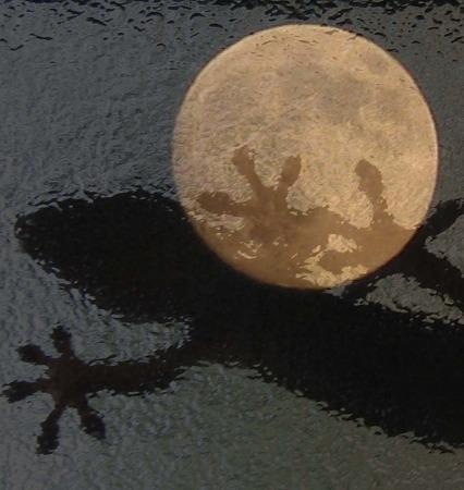 月とヤモリ (アップ)