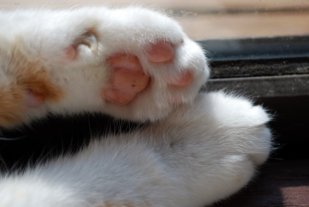 Paws by the Sun