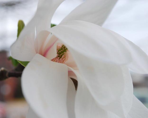 Magnolia 5-3-09