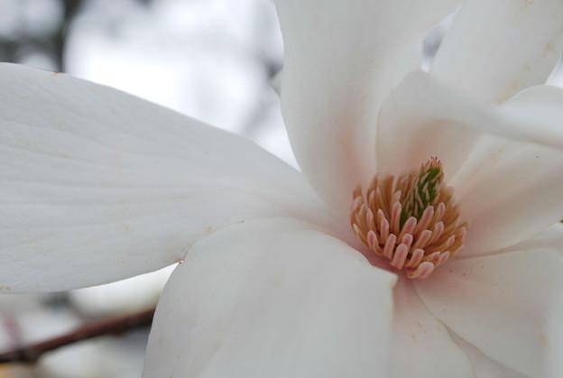 Magnolia 5-03-09