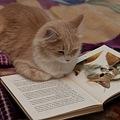 写真: The Kitty Reading about Billy