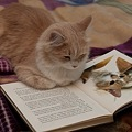 The Kitty Reading about Billy