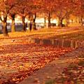 【秋のコンクール用】秋道
