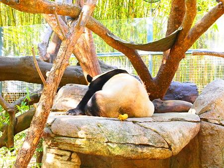 あっちむいたパンダ
