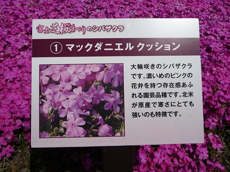 100518-富士芝桜まつり-26