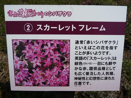 100518-富士芝桜まつり-30