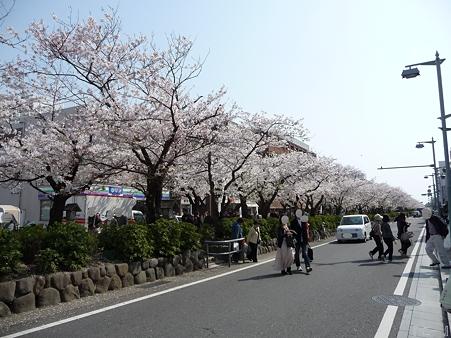 110411-鎌倉 段葛 (19)