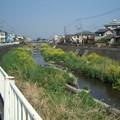 Photos: 川口川