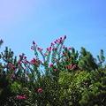 写真: 空と花