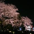 Photos: 070329sakura3