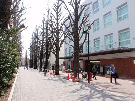 東京工業大学大岡山キャンパス 南4号館東側道路
